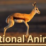 National Animal